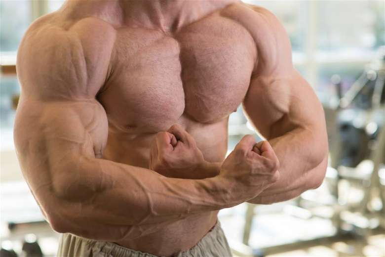 Steroid users lose fat and gain muscles faster
